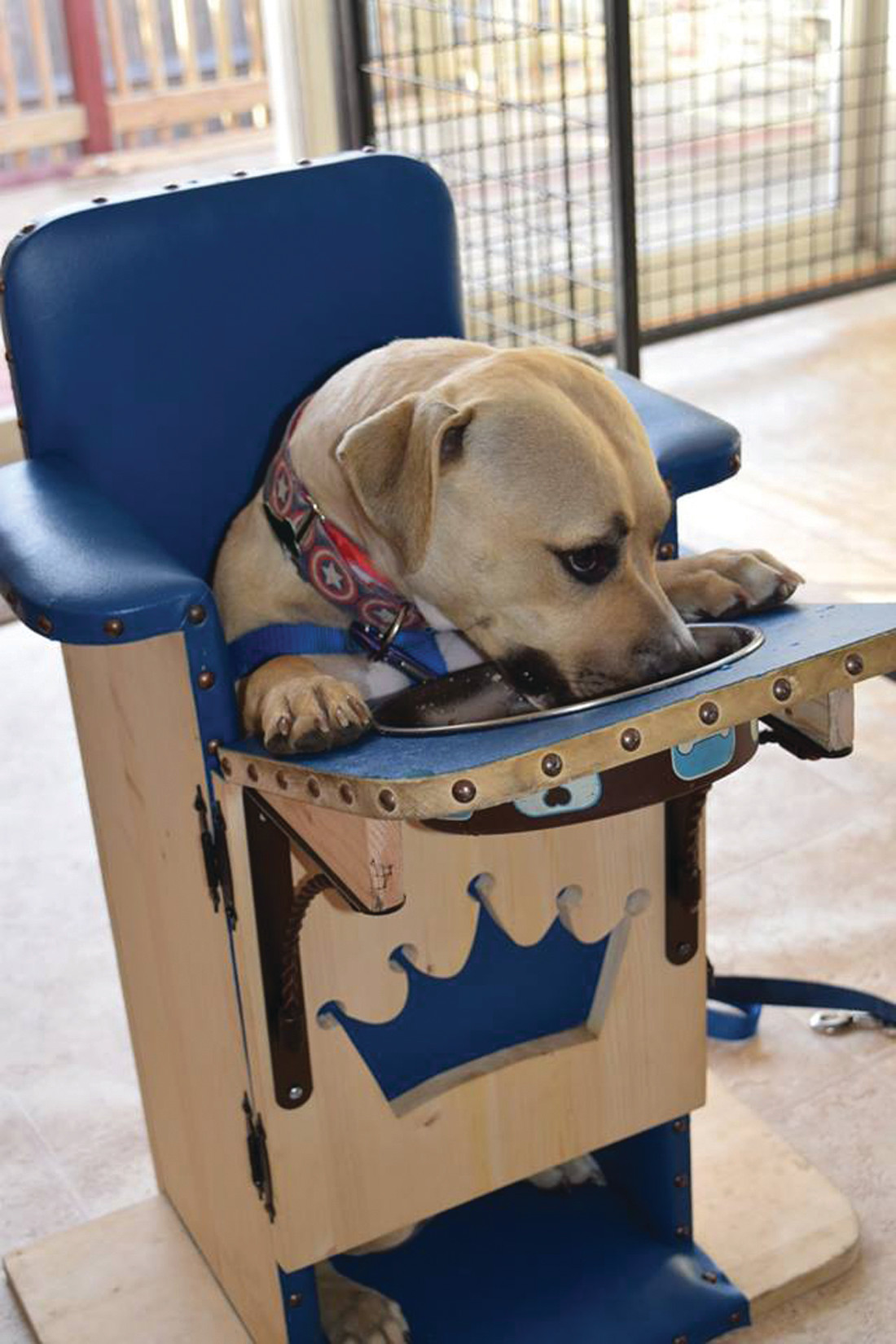 dog high chair bedroom chairs ikea special needs would love a home cranston herald