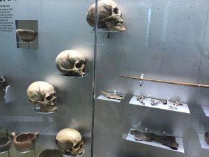 Musée d'histoire naturel Santa Cruz Tenerife