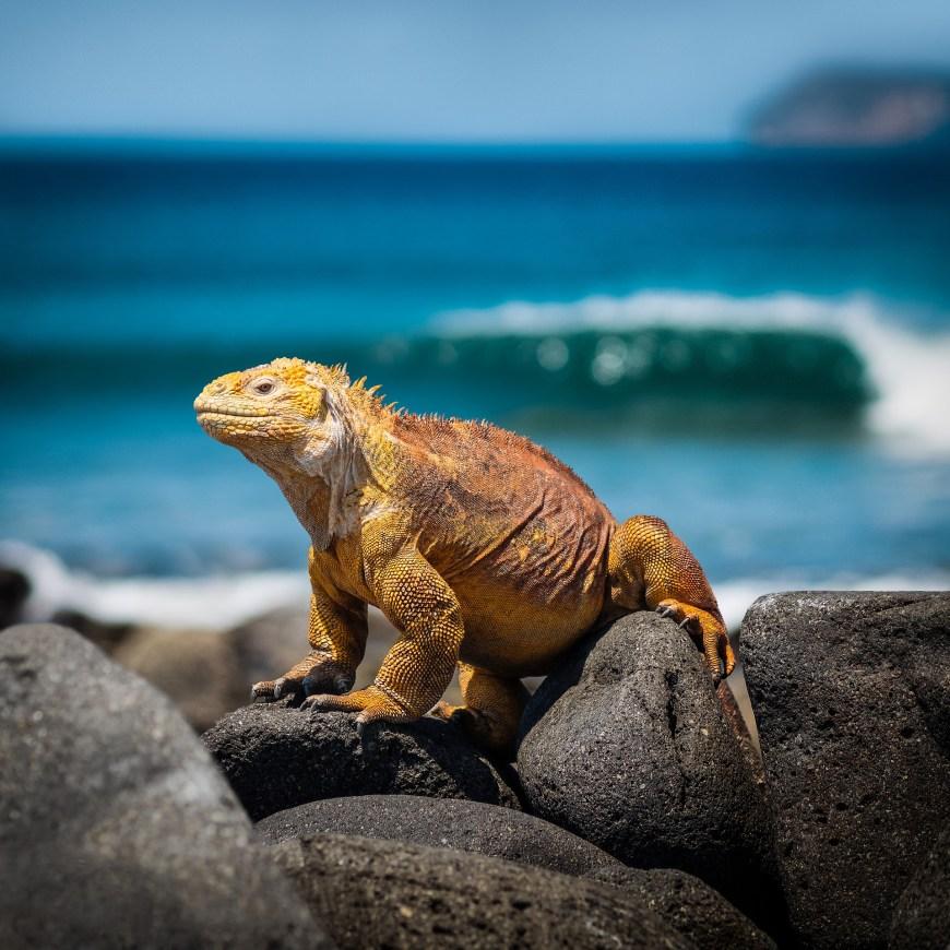 galapagos - Tour du monde en famille - Itinéraire