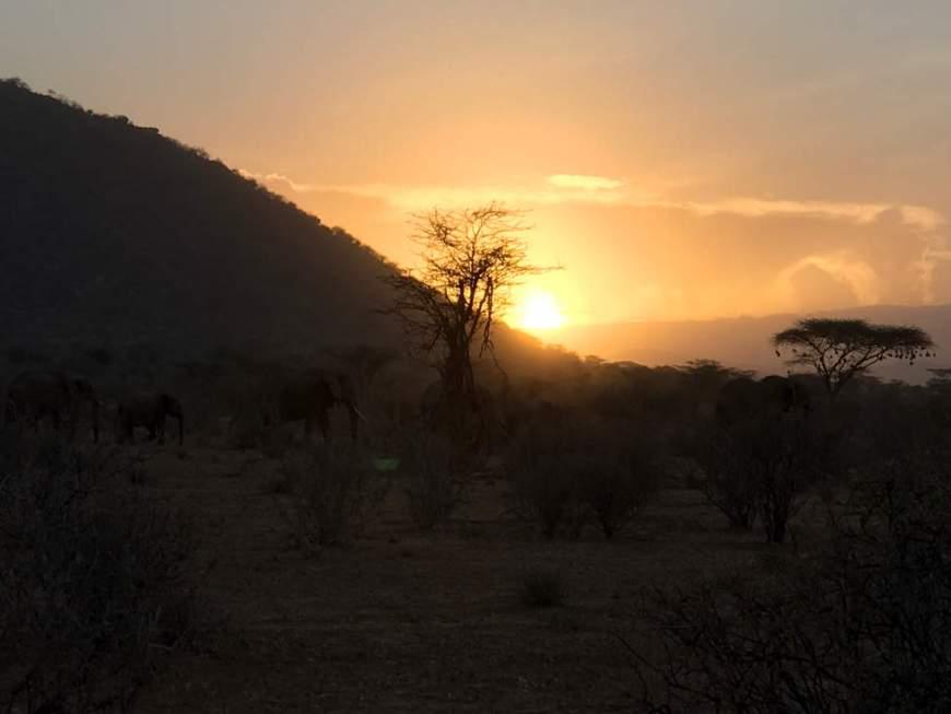 éléphants au Kenya - Samburu