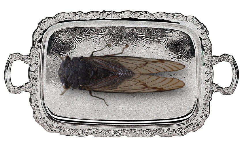 A giant cicada on a silver serving-tray.