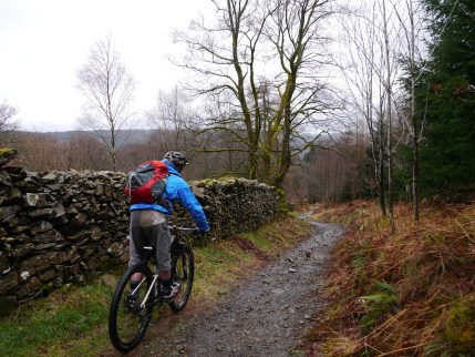 Onto Grizedale forest trails!