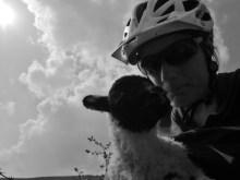 Lamb et moi