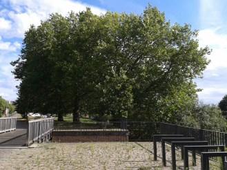 2016_Aug 01 Bäume2