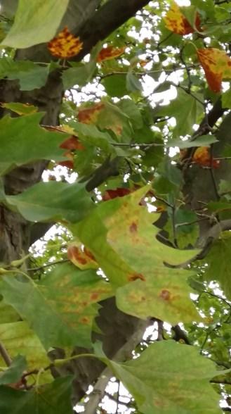 2016_Sept 4 Bäume4