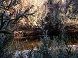 creekthroughthebrushedit