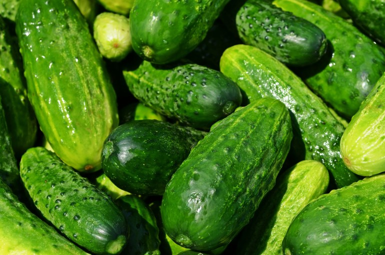 10 Vegetables that are really fruits_cucumber