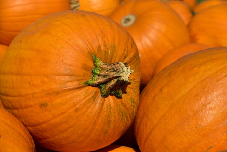 10 Vegetables that are really fruits_pumpkin
