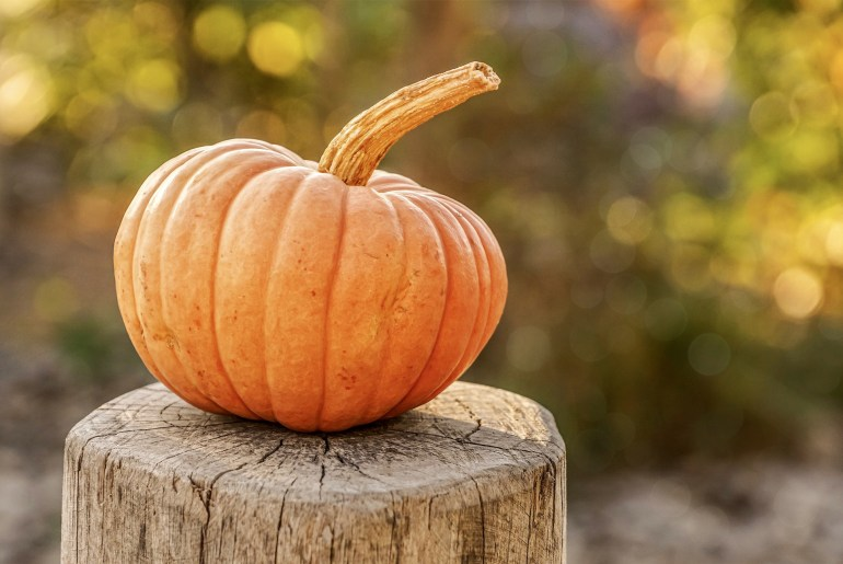 12 fun facts you never knew about pumpkins