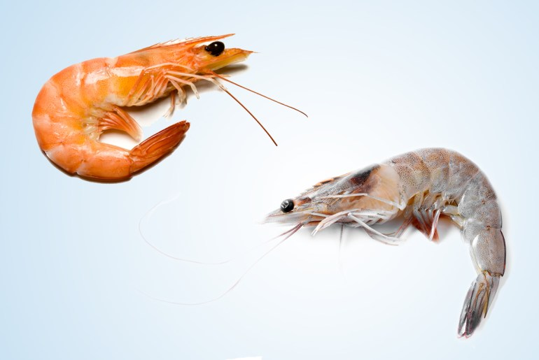 How to tell the difference between a shrimp and a prawn