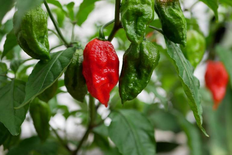 Merriam-Webster adds 'umami,' 'ghost pepper,' 'go-cup' and more to dictionary