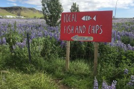 iceland-food-what-to-know-before-you-go-fish-n-chips-local-sign-meghan-rodgers