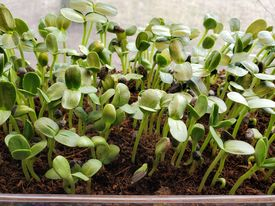 SEK Plant Swap Gathering
