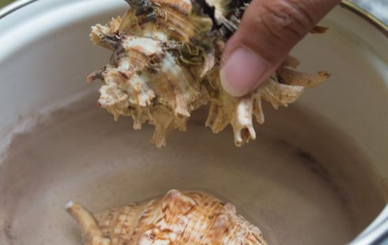 How to Clean Seashells with Vinegar