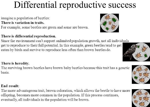 What is The Effect of Differential Reproduction Over Time