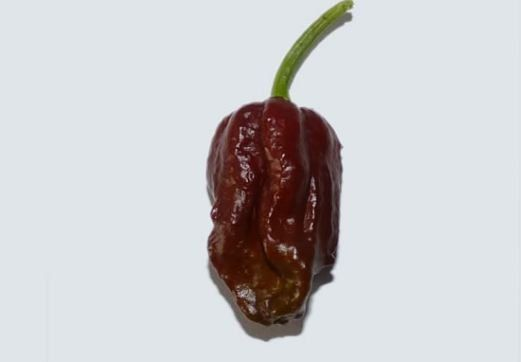 What is the Hottest Pepper in The World