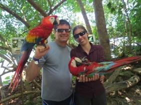 Jamaica - Holding parrots