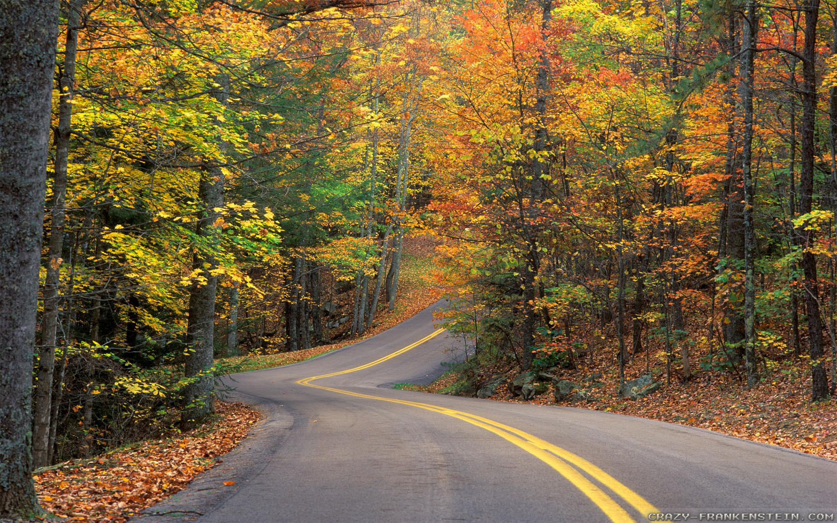 Free Computer Wallpaper Fall Leaves Autumn Road Wallpapers 2 Crazy Frankenstein