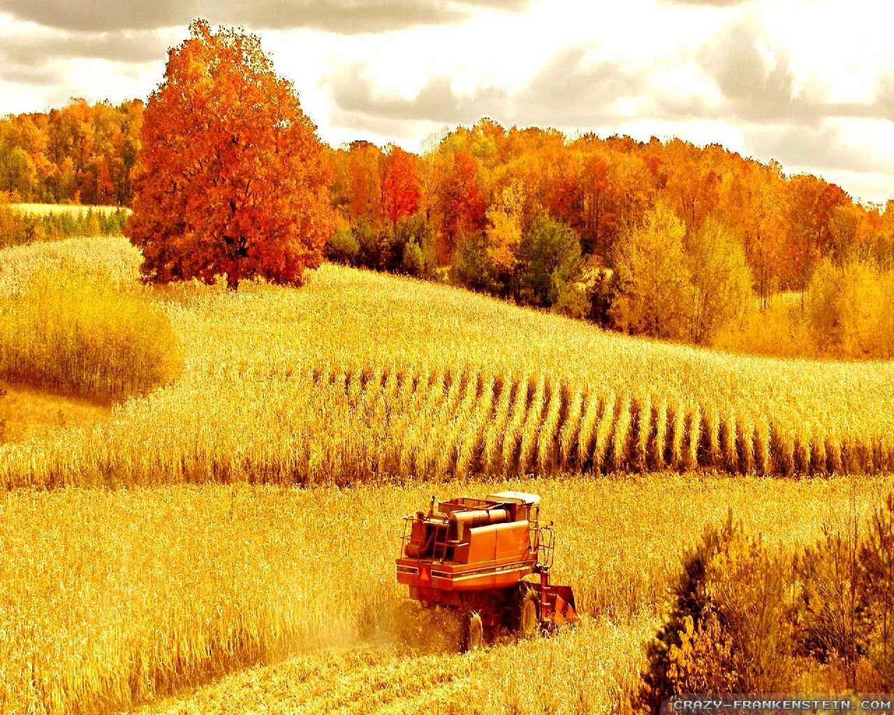Wallpaper Scenes Of Fall Autumn Scenes Wallpapers Seasonal Crazy Frankenstein