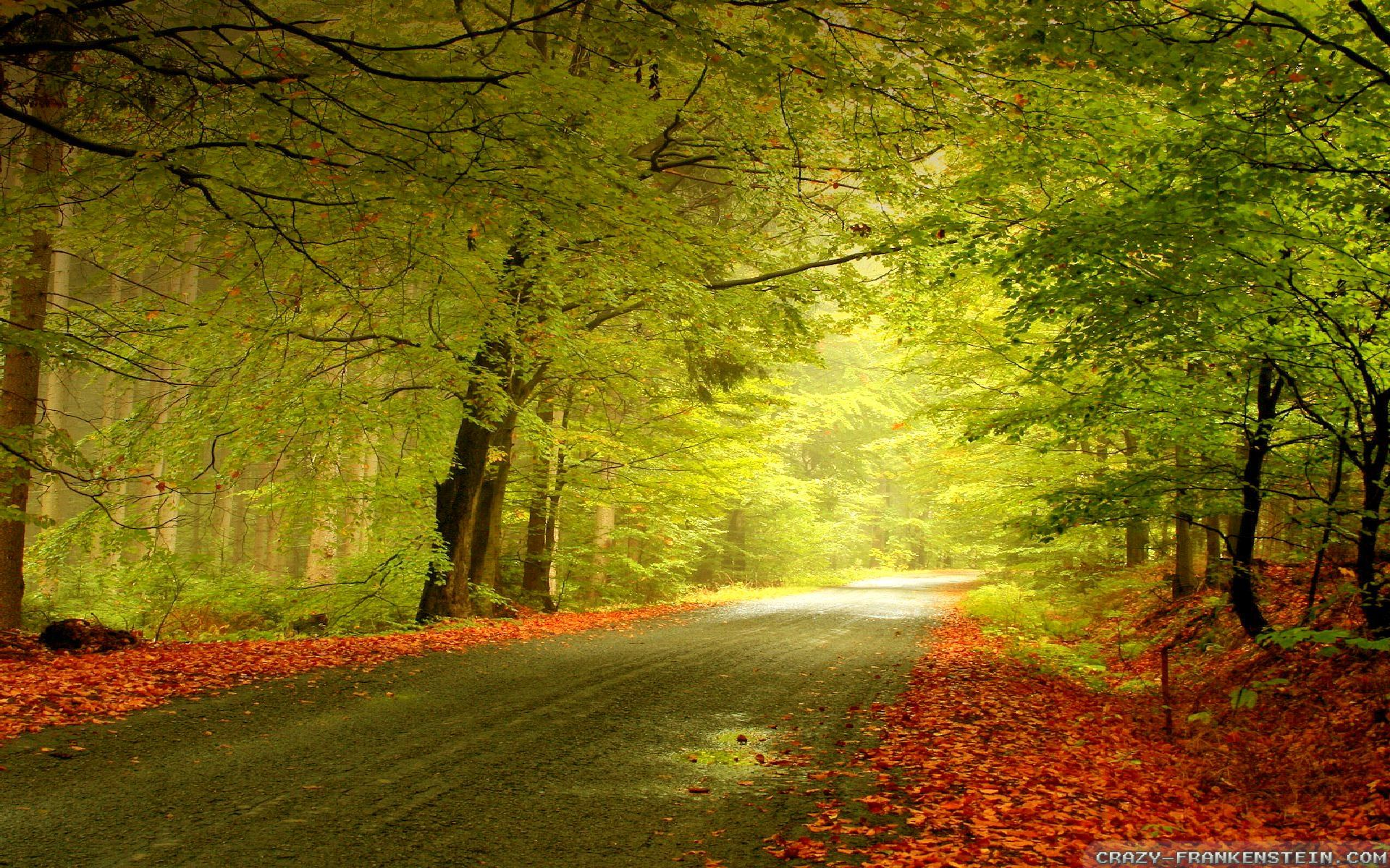 Free Wallpaper Fall Scenes Autumn Woods Wallpapers Seasonal Crazy Frankenstein