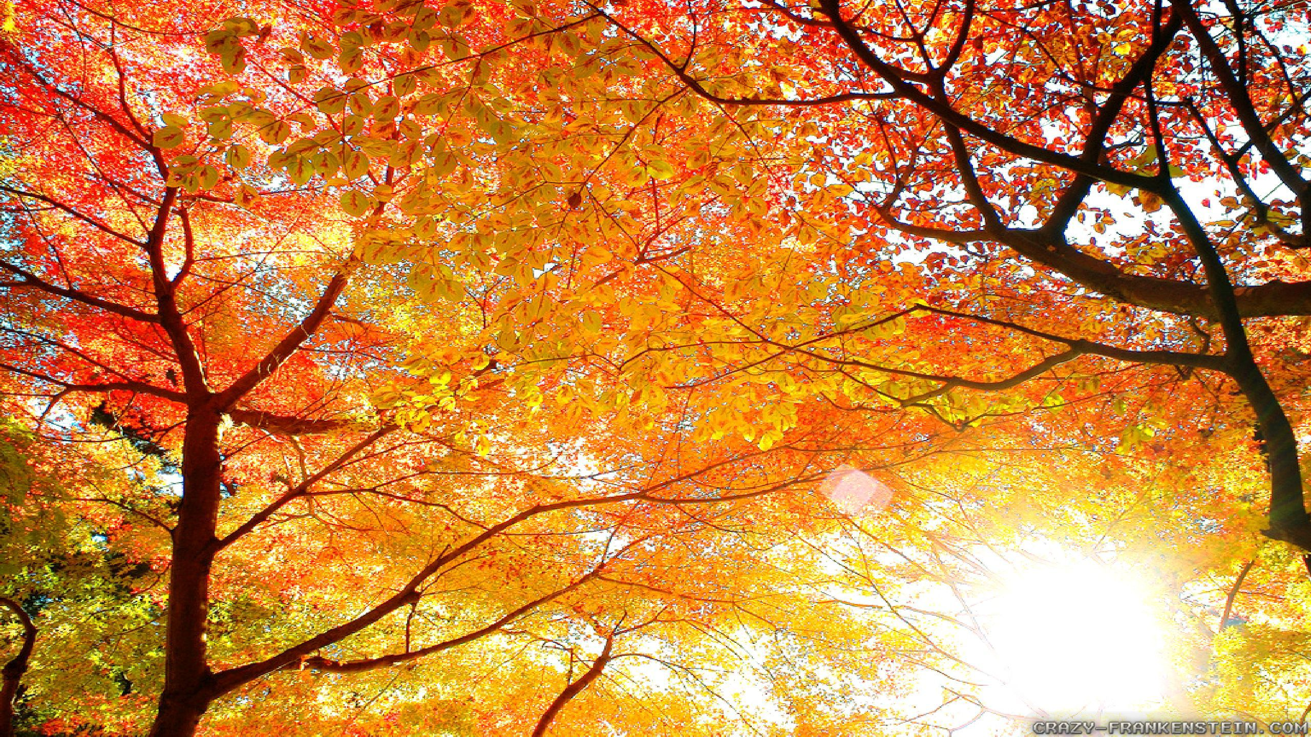 Pretty Wallpapers For Fall Beautiful Autumn Wallpapers 3 Seasonal Crazy Frankenstein