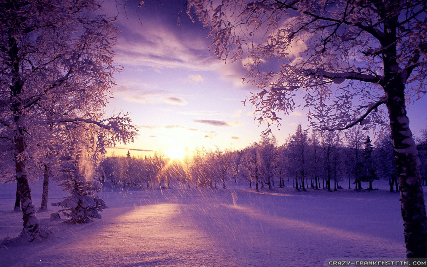 Wallpaper Phone Falling Snowflakes Winter Is Coming Wallpapers Crazy Frankenstein