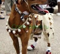 Модная одежда для собак своими руками