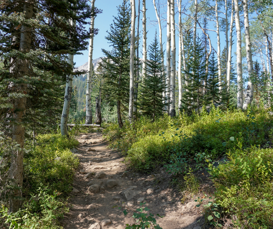 Colorado hiking trails, hiking on Kebler Pass, Lost Lake Campground, Three Lakes Trail, Dollar Lake, easy hiking trails, Kebler Pass hikes