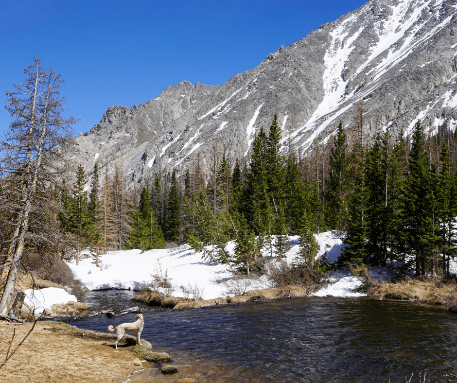 Beautiful Browns Lake on Browns Creek Falls Trail, Lake hikes, waterfall hikes, Colorado hikes, family hikes, strenuous hikes in Colorado, Mt Princeton, Mt. Antero, Buena Vista, Salida, Nathrop CO, hikes for backpacking in Colorado, Colorado trails