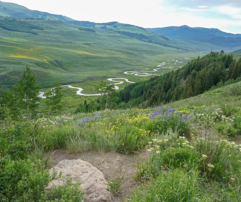 Crested Butte Wildflower Festival. Mount Crested Butte, Gothic CO, hiking trails Crested Butte, Judd Falls