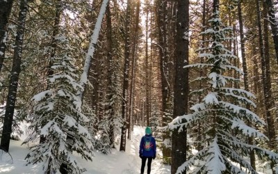 Winter Trails in Colorado's Backcountry