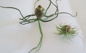 air plants drying upside down