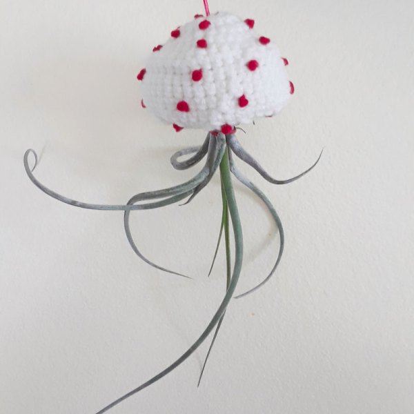 spotted crochet jellyfish air plants