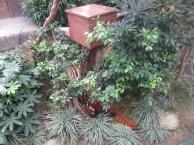 Ocean-Park-Hong-Kong-red-panda