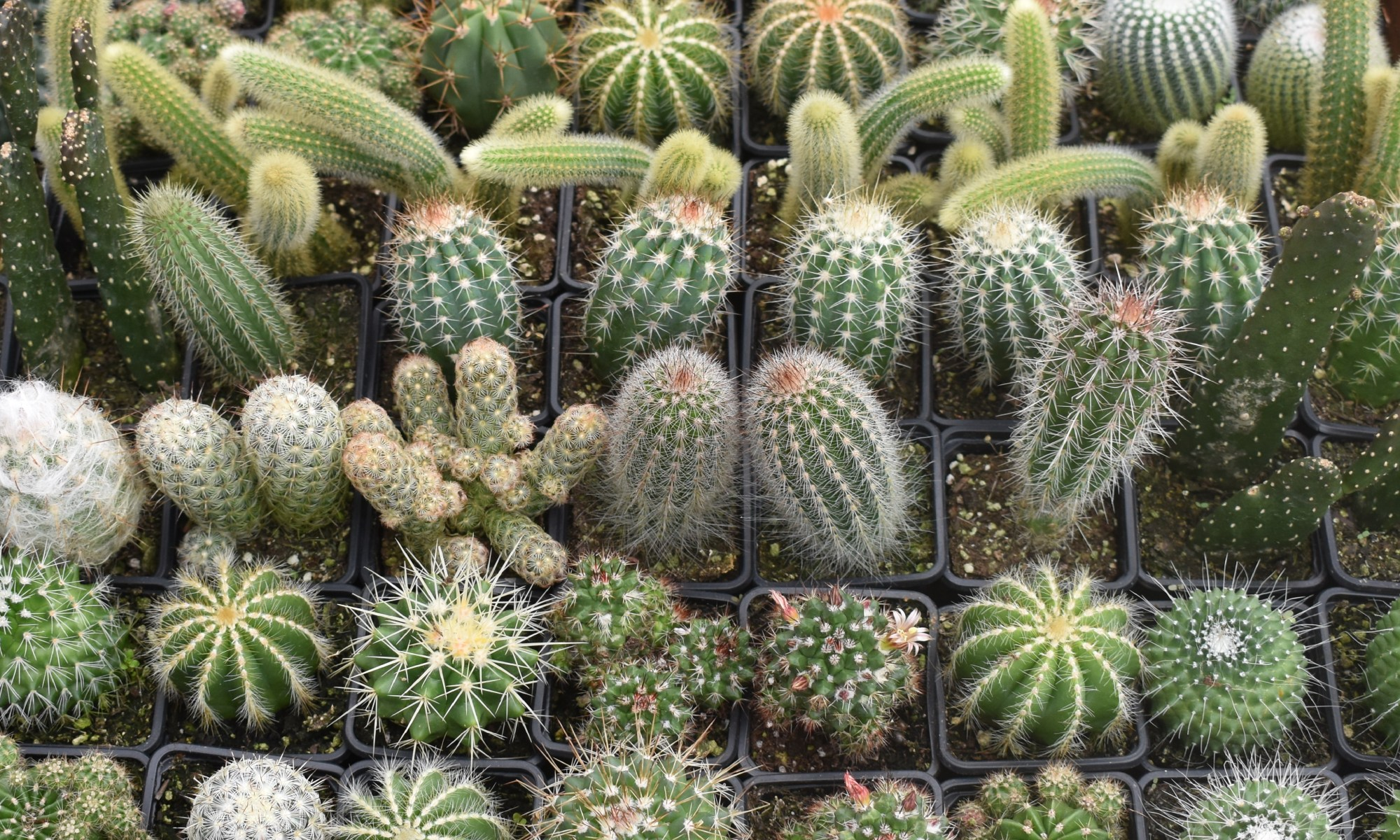 Cactus for sale at Crazy Criters