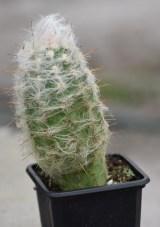 Assorted Cactus Plants