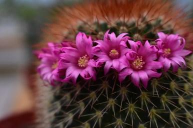 Unique Cactus