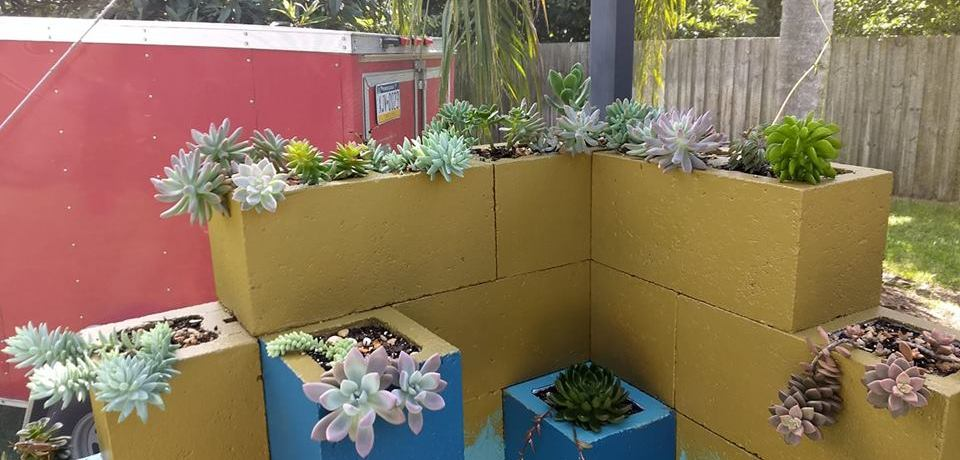What do our visitors do with their succulents