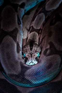 photo of snake