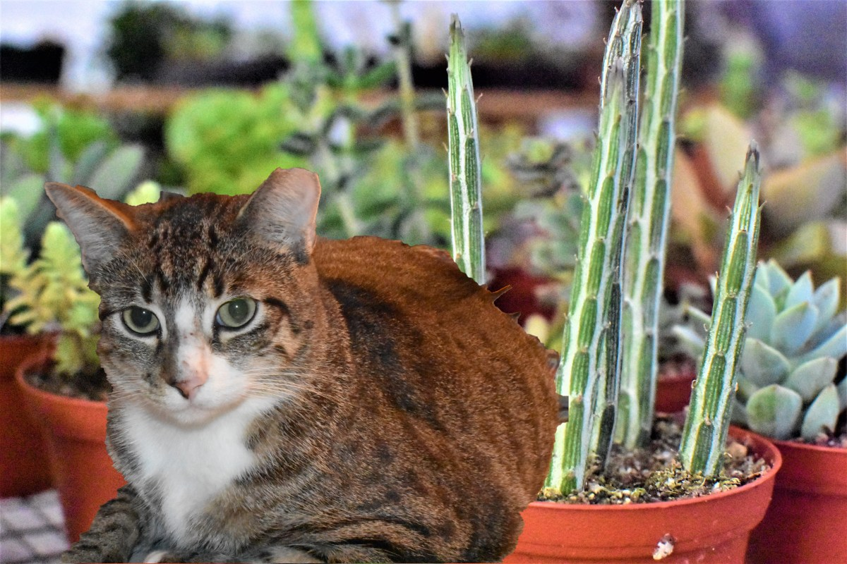 Cat Friendly Plants Even When Your Cat Is Not Friendly To Them