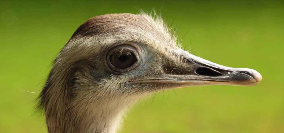 bird animal head portrait