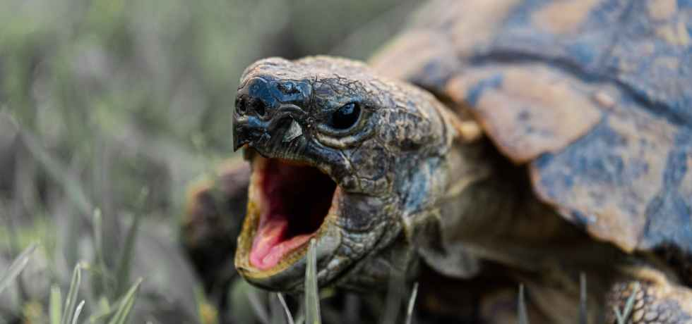 photo of turtle s mouth
