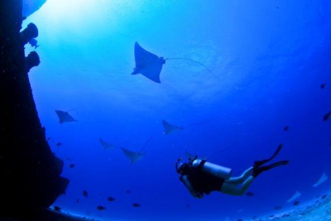 Mergulhar nas águas de Cozumel significa deparar-se com tartarugas gigantes, cavalos-marinhos e, se der sorte, arraias-águia.
