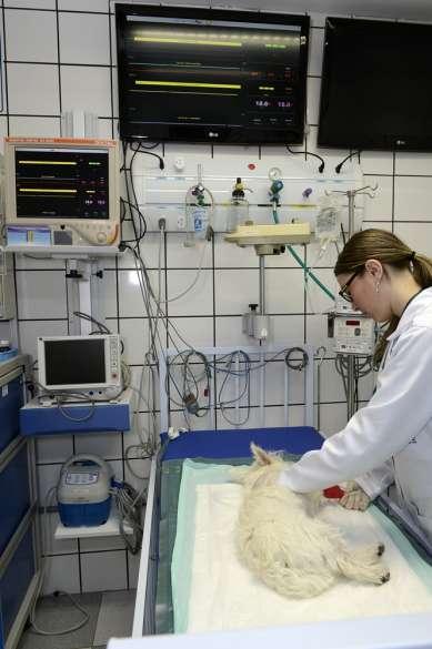 Equipe veterinária do hospital Pet Care fará um estudo eletrofisiológico no coração de um cão com auxilio de médicas eletrofisiologistas hoje, dia 2, na unidade Morumbi.