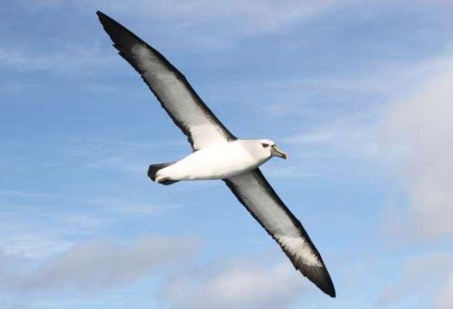 Mostra em Cabo Frio integra as comemorações dos 25 anos do projeto de preservação das aves marinhas.
