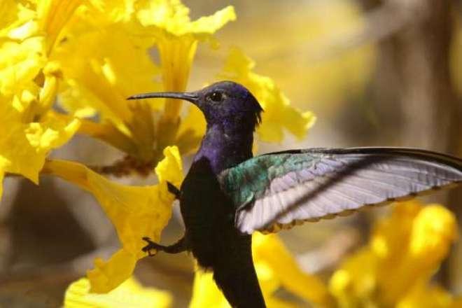 Descarte consciente é parte de projeto global para proteção ao meio ambiente.