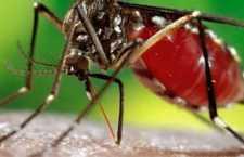 O grande risco é que se o hospedeiro humano (a pessoa que está com febre amarela) for picada pelo Aedes aegypti dentro da zona urbana, esse mosquito pode transmitir a febre amarela para outras pessoas dentro do município - ciclo urbano, quando deixade existir apenas em matas)