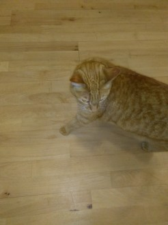cat hilton