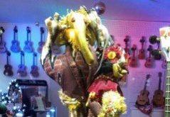 olifant-widecrop