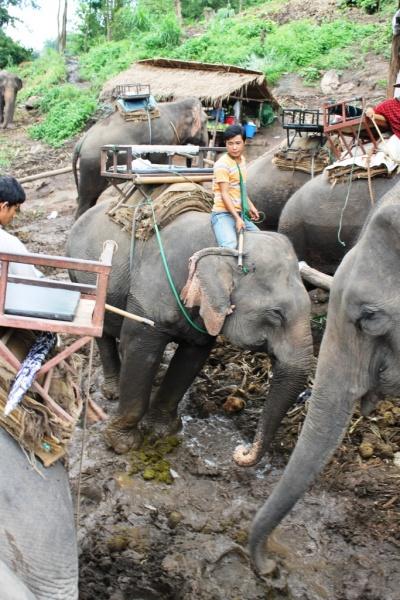 Elephant show in the mountains near Chiang Rai